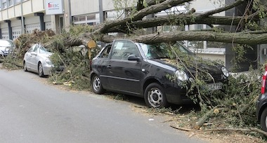 Tree fallen on top of a car